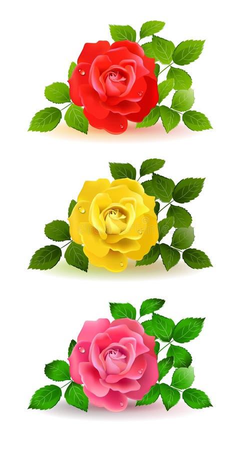 różnorodne kolor róże ilustracji