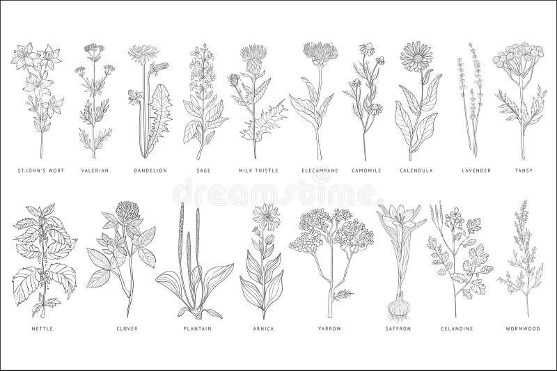Różnorodne lecznicze rośliny i kwiaty ustawiający, monochromatyczna ręka rysować nakreślenie wektorowe ilustracje na białym tle ilustracji