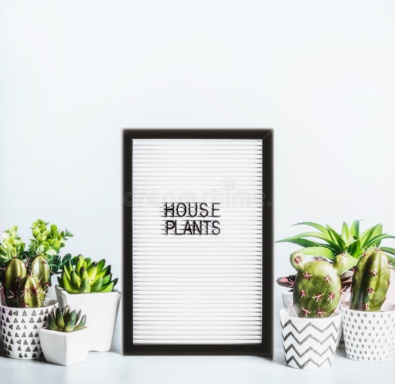 Różnorodne salowe rośliny i kaktus w garnkach wokoło list deski mit teksta domu rośliien na nowożytnym desktop tle zasadź sukulen obraz royalty free