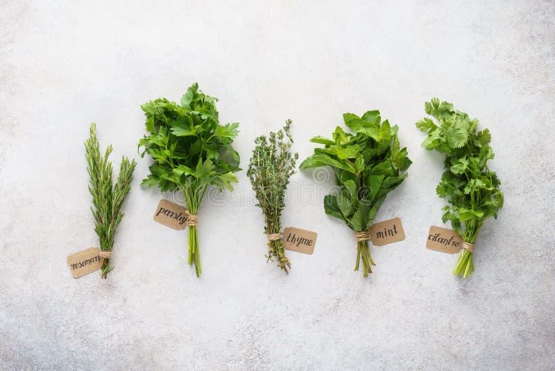 Różnorodni świezi ziele z papierowymi etykietkami na szarym tle zdjęcie stock