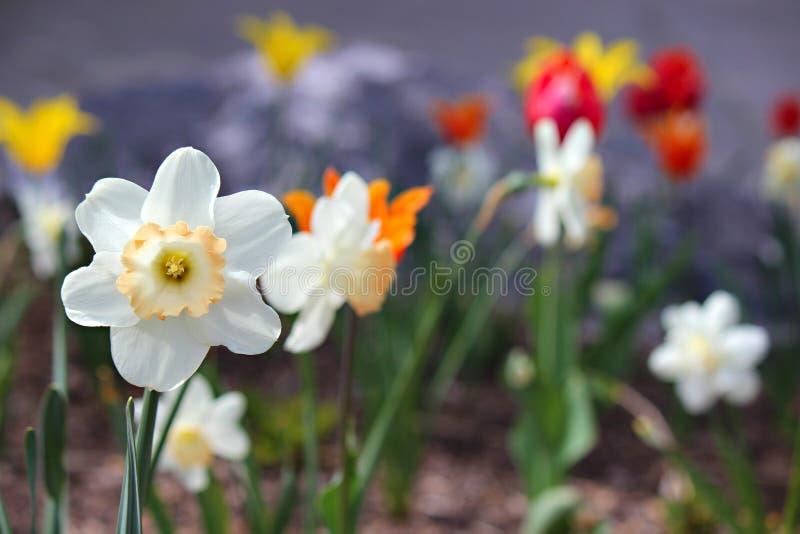 Różnorodni kolorowi kwiaty w ogródzie fotografia royalty free
