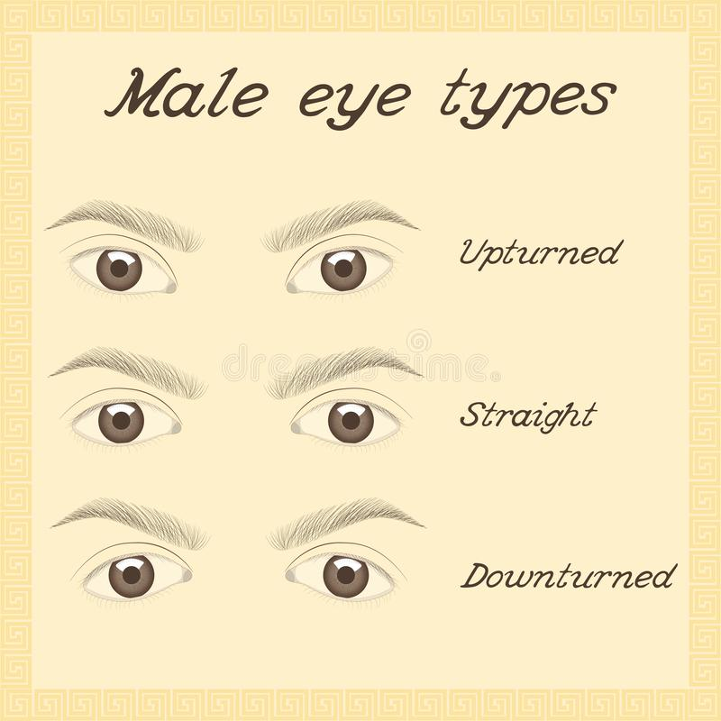 Różnorodni męscy oko typy ilustracji