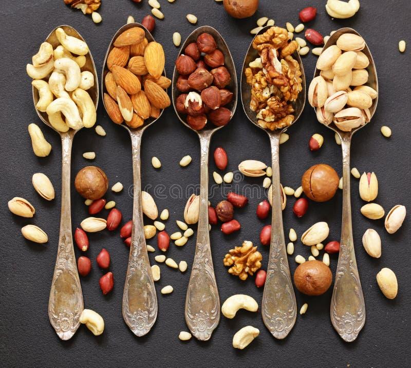 Różnorodni rodzaje dokrętki cedr, nerkodrzew, hazelnuts, orzechy włoscy obrazy stock