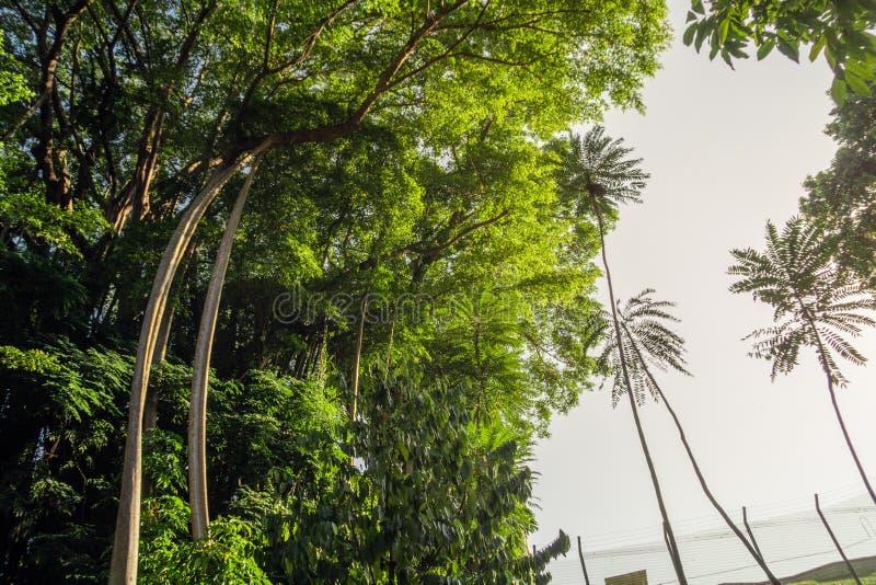 Różnorodni rodzaje wysokie rośliny w fortu Konserwuje parku fotografia stock