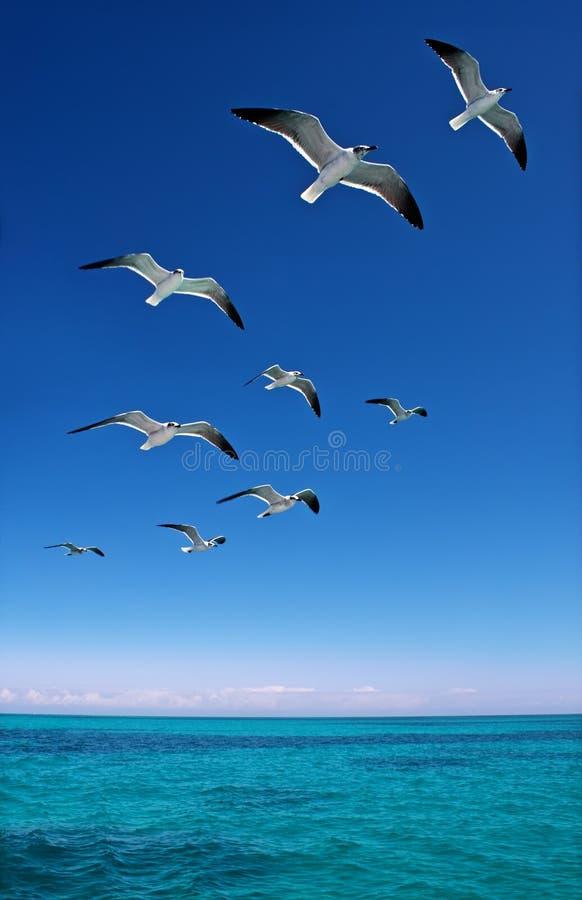 Różnorodni seagulls lata nad błękitnym morzem zdjęcia royalty free