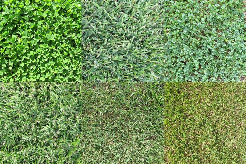 Różnorodni trawa typ 2 obrazy stock