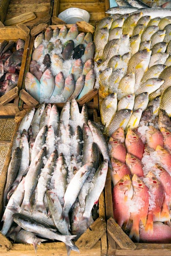 Różnorodni typ surowa ryba wystawiają na stole dla sprzedaży w rynku Ryba mieszają z lodem konserwować swój świeżość obrazy stock