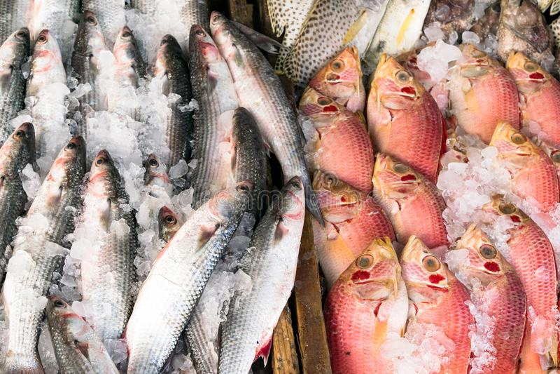 Różnorodni typ surowa ryba wystawiają na stole dla sprzedaży w rynku Ryba mieszają z lodem konserwować swój świeżość zdjęcia stock