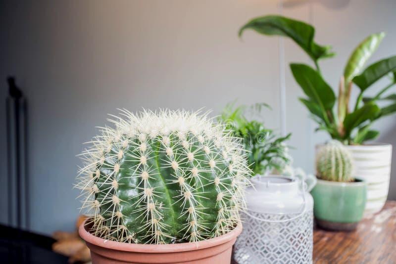 Różnorodni typy kaktusowego i zielonego domu rośliny na drewnianym stole, nowoczesne projektu zdjęcie stock