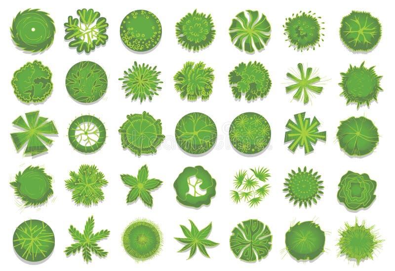 Różnorodni zieleni drzewa, krzaki i krzaki, odgórny widok dla krajobrazowego projekta planu Set wektorowe ilustracje, odizolowywa royalty ilustracja