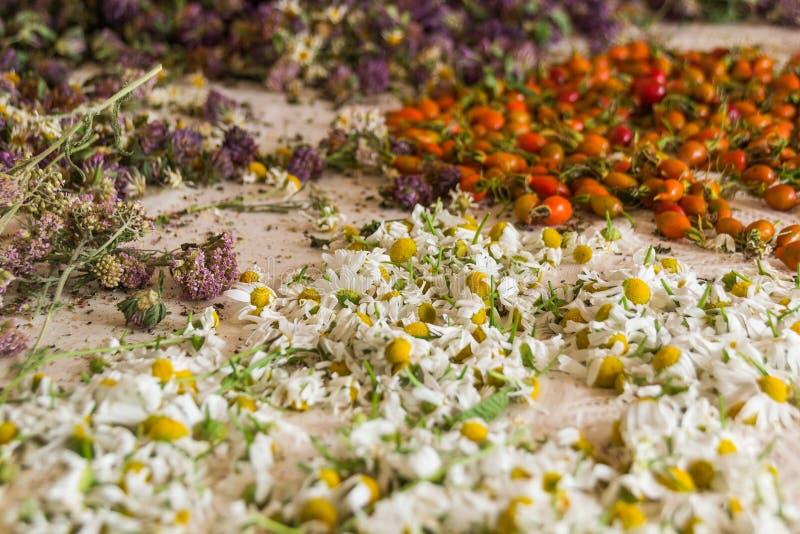 Różnorodność wysuszone jagody na tablecloth tle i ziele Herbaciani ziele zdjęcia royalty free