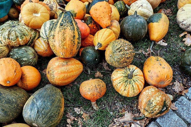 Różnorodny asortyment pomarańcze i zieleni banie na ziemi przy rolnikiem wprowadzać na rynek Jesieni żniwo zdjęcie stock