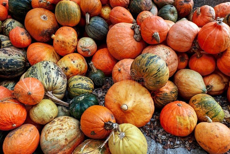 Różnorodny asortyment pomarańcze i zieleni banie na ziemi przy rolnikiem wprowadzać na rynek Jesieni żniwo zdjęcia royalty free