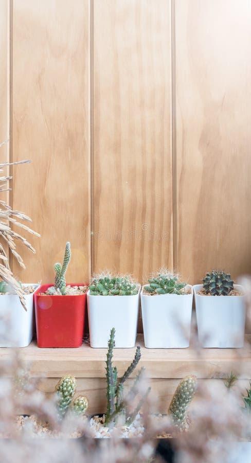 Różnorodny mały kaktusowy garnek wystawiający na drewnianej półce w kawiarnia sklepie zdjęcie stock