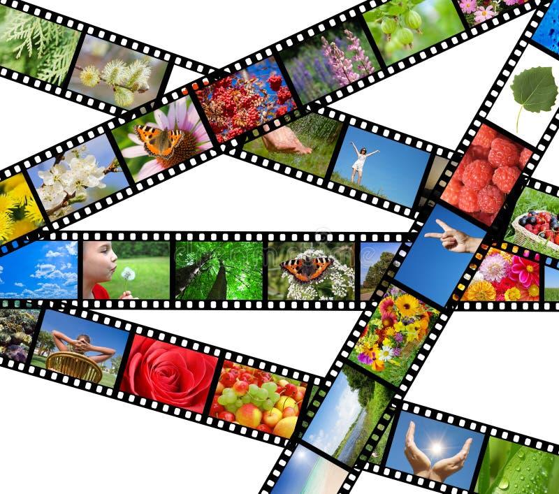 różny ekranowy życia natury fotografii pasek obraz royalty free