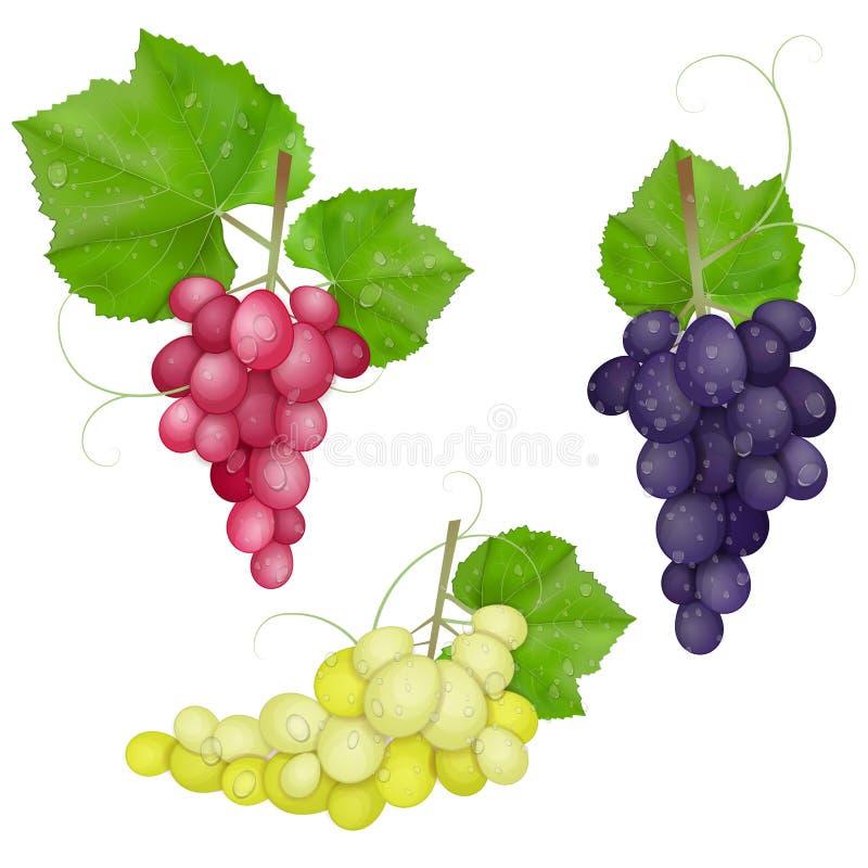różny szklany winogron liść rozmaitość wino ilustracja wektor