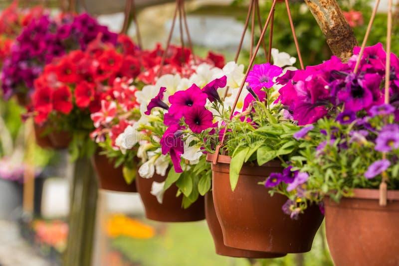 Różny typ kwitnie i rośliny w szklarni zdjęcie stock
