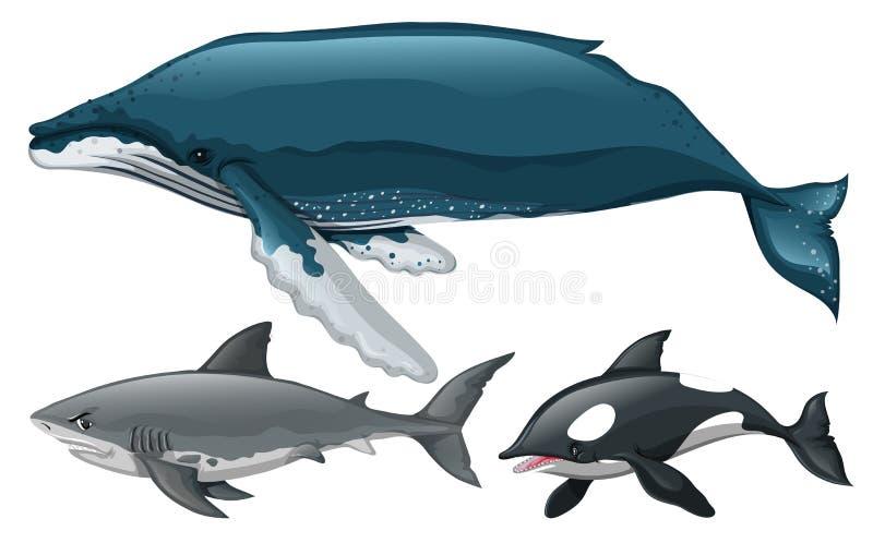 Różny typ wieloryb i rekin ilustracji