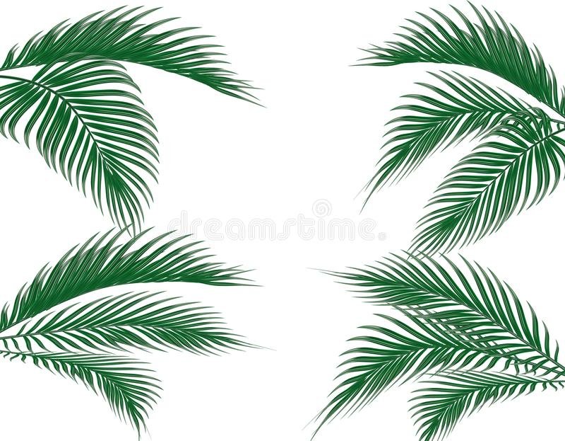 Różny w formularzowej tropikalnej ciemnozielonej palmie opuszcza na cztery stronach Set pojedynczy białe tło ilustracja royalty ilustracja
