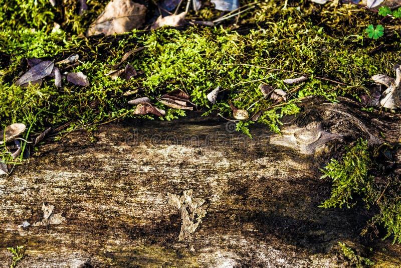 Różny widok liście i drewno zdjęcia royalty free