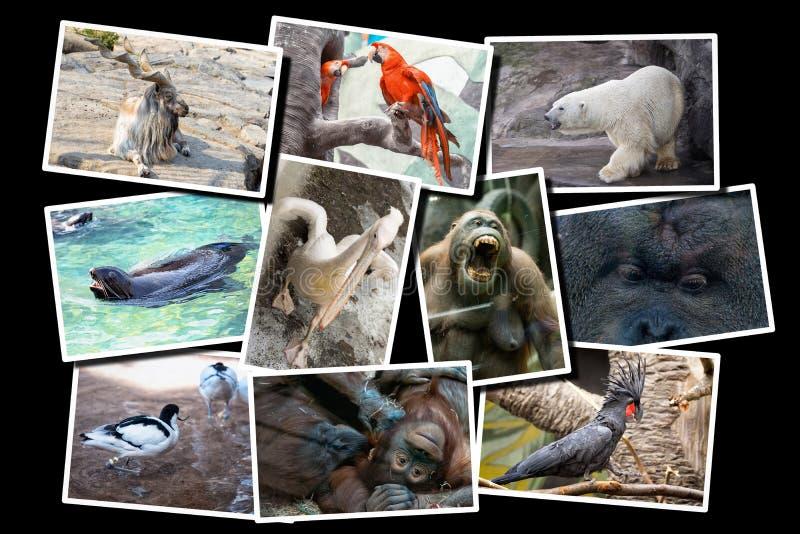 Różny zwierzę kolaż na pocztówce obraz stock