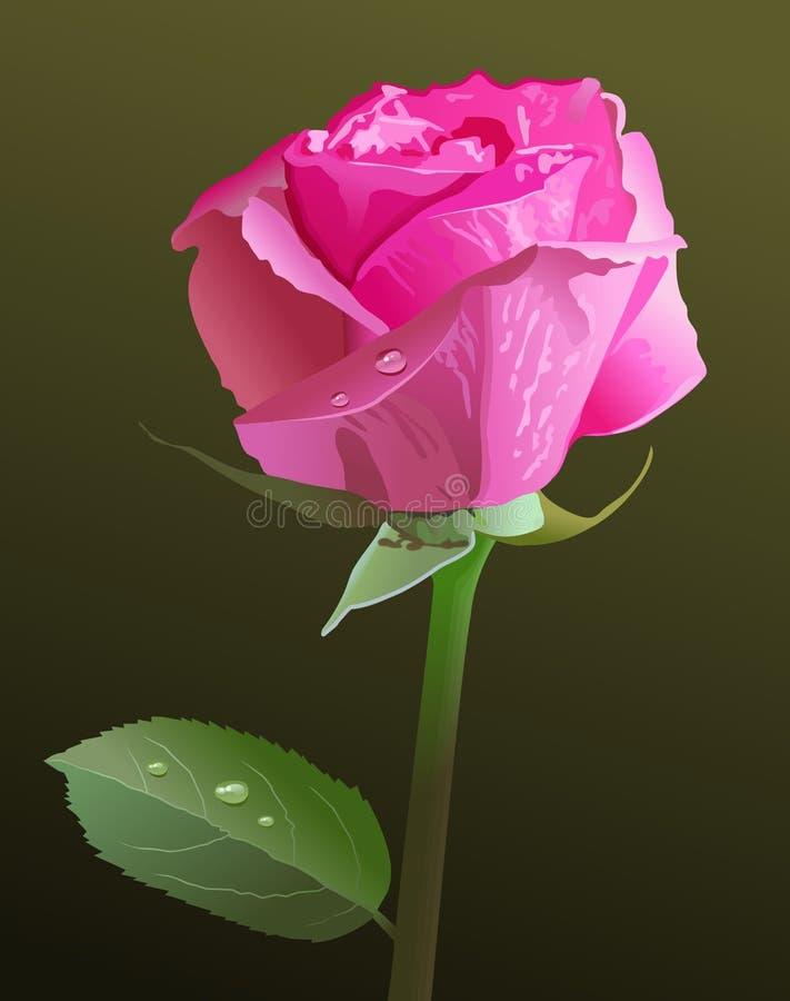 różową różę ilustracji