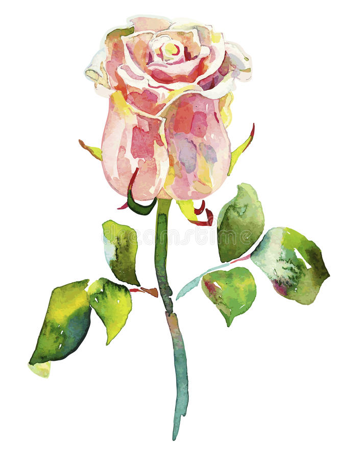 Różowa akwarela wzrastał royalty ilustracja
