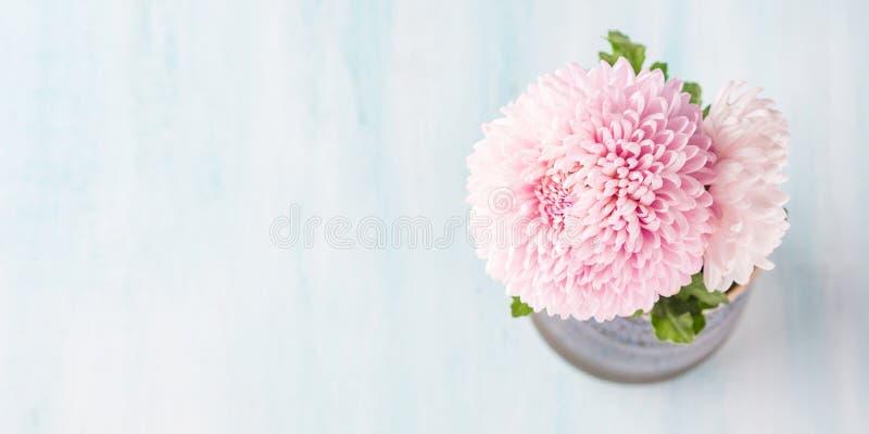 Różowa chryzantema w wazie na pastelowym kolorze zdjęcia stock