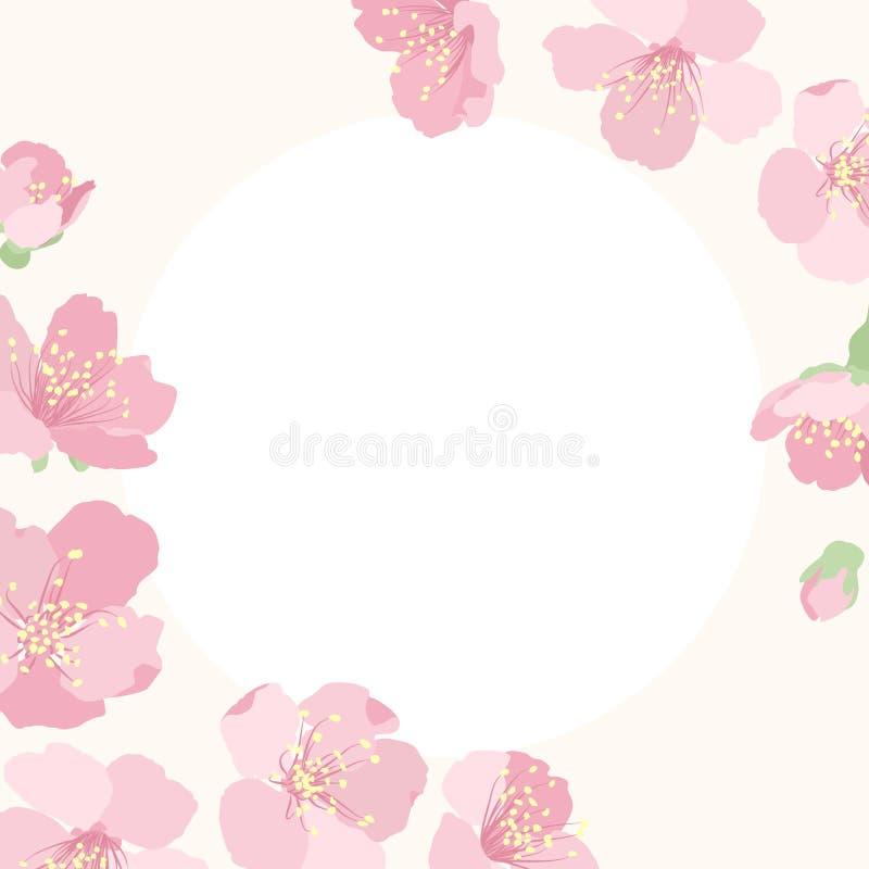 Różowa czereśniowa Sakura kwiatu okwitnięcia granicy rama ilustracji