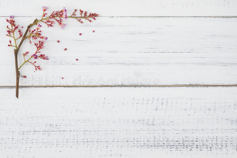 Różowa gwiazdowa owoc kwitnie na białym drewnie obrazy royalty free