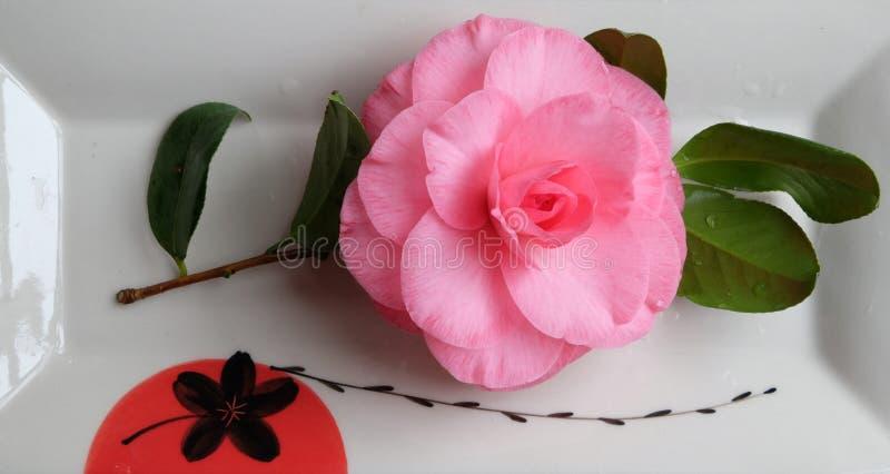Różowa kamelia w delikatnym porcelany naczyniu obrazy royalty free