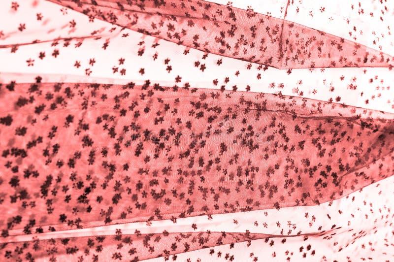 Różowa koronka na białym tle Ekstrawagancja i elegancja jesteśmy com obrazy stock