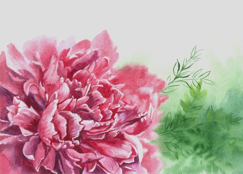 Różowa kwiat peonia royalty ilustracja