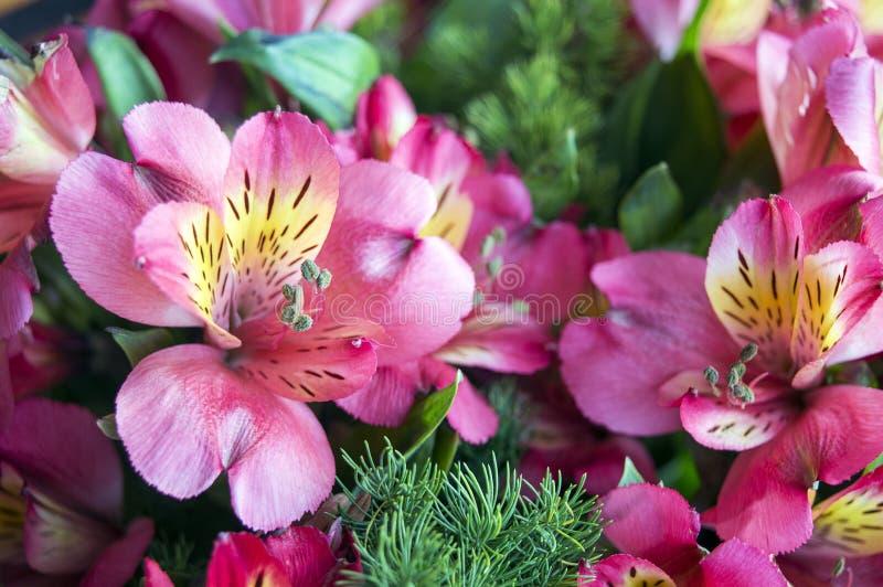 Różowa leluja Incas kwitnie w bukiecie zdjęcia royalty free