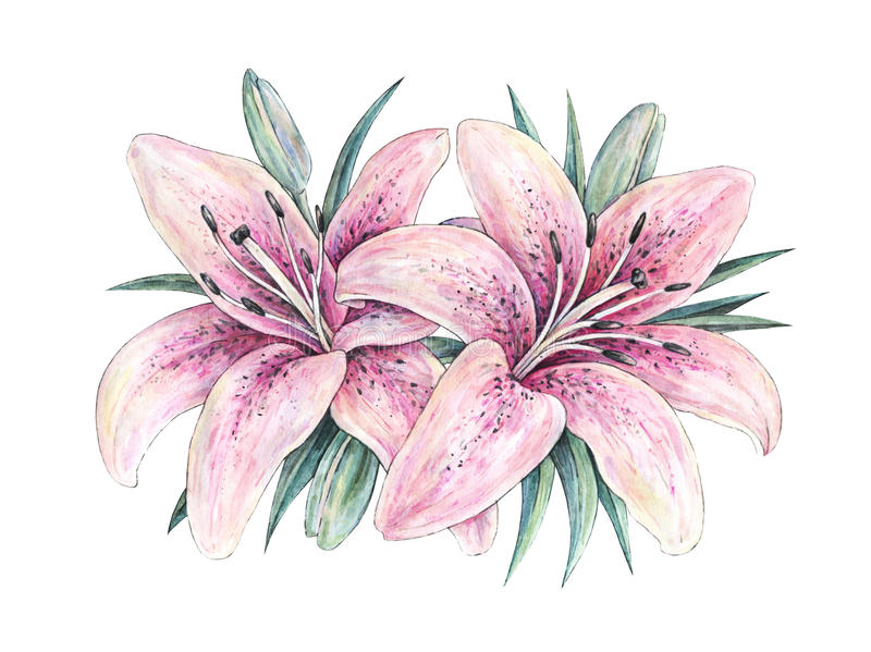 Różowa leluja kwitnie na białym tle Akwareli handwork ilustracja Rysować kwitnąca leluja z zielonymi liśćmi ilustracja wektor