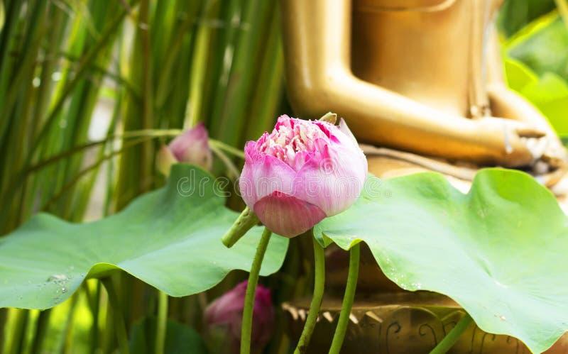 Różowa lotosowa tła Buddha statua obrazy stock