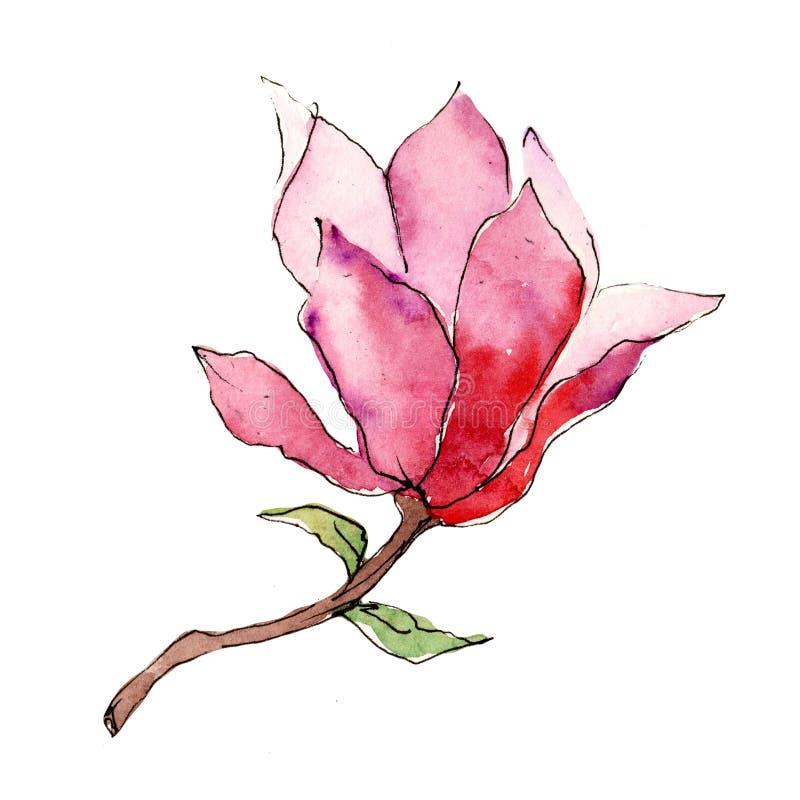 Różowa magnolia Kwiecisty botaniczny kwiat Dziki wiosna liścia wildflower odizolowywający ilustracji