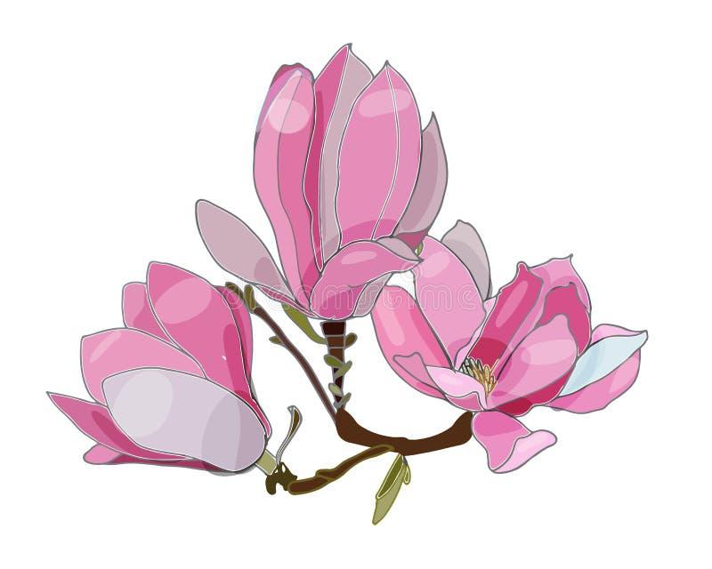 Różowa magnolia na tha bielu tle kwiat ilustracja wektor