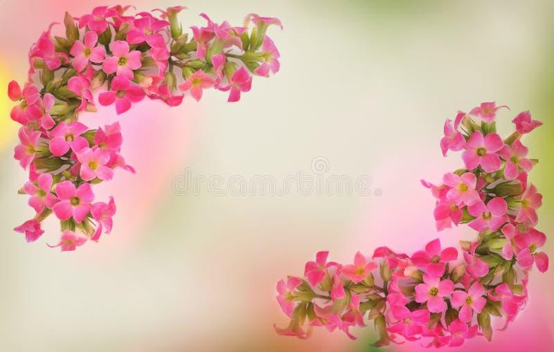 Różowa okwitnięcie granica zdjęcia royalty free