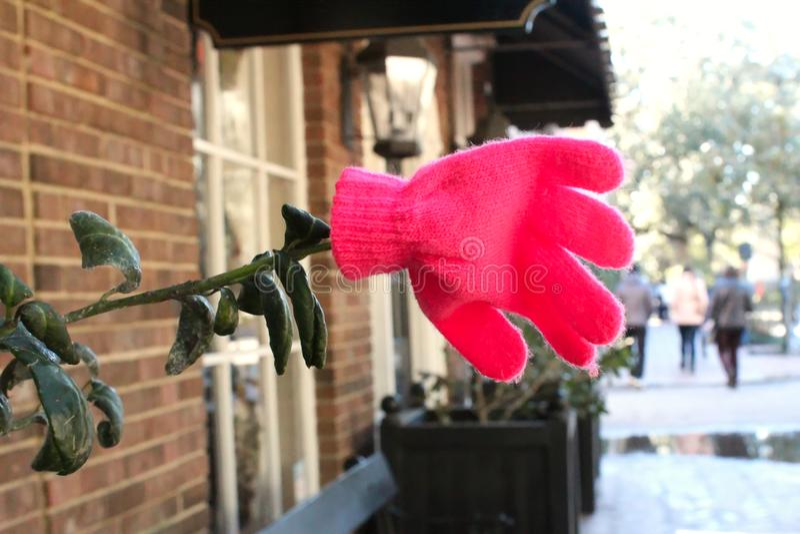 Różowa rękawiczka wzrastał zdjęcie stock