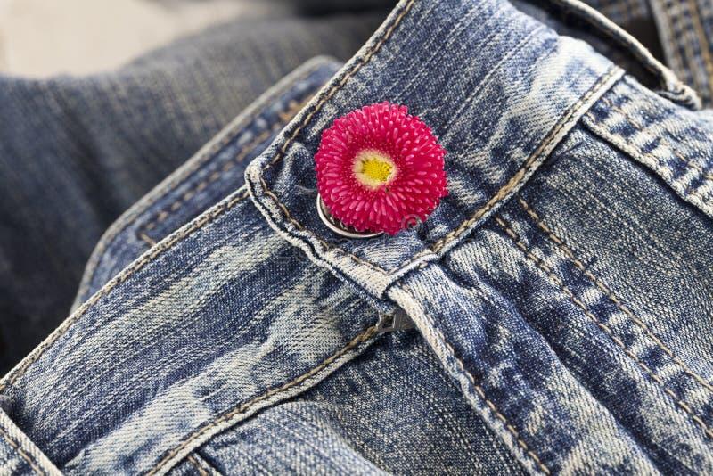 Różowa stokrotka Na niebieskich dżinsach fotografia stock