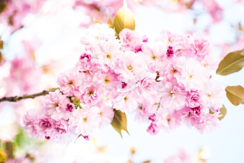różowa wiosna obraz stock