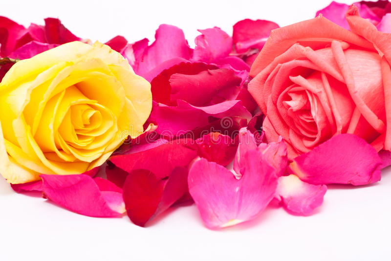 Różowe i żółte róże i płatki fotografia royalty free