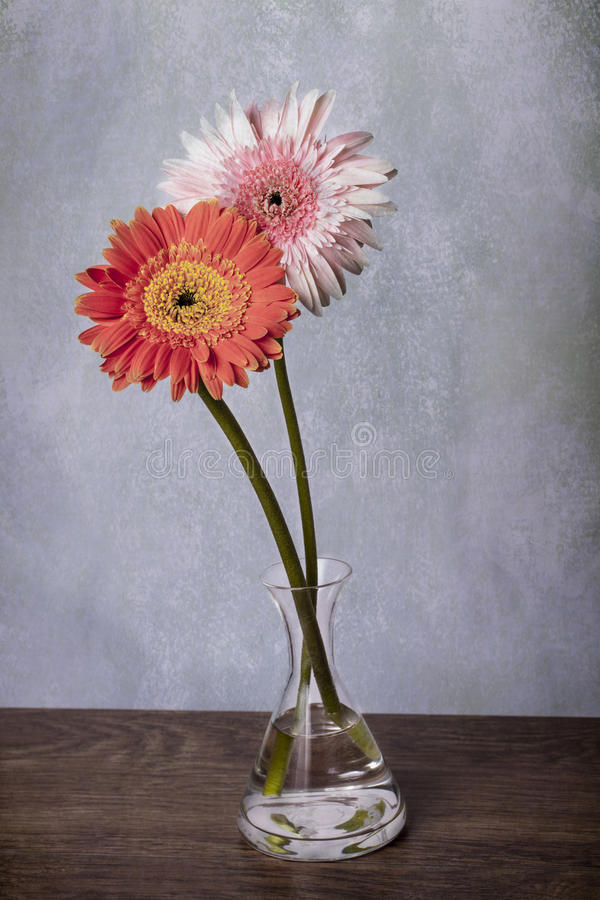 Różowe i pomarańczowe gerber stokrotki w jasnej wazie zdjęcia royalty free