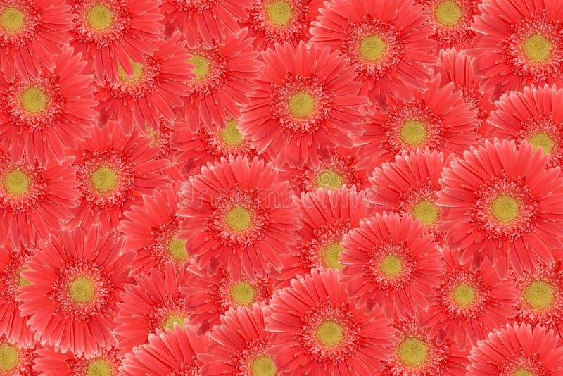 różowe kwiaty tło zdjęcia stock