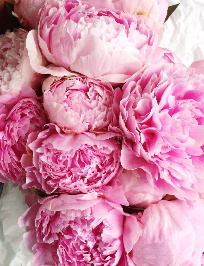 Różowe peonie zdjęcie stock