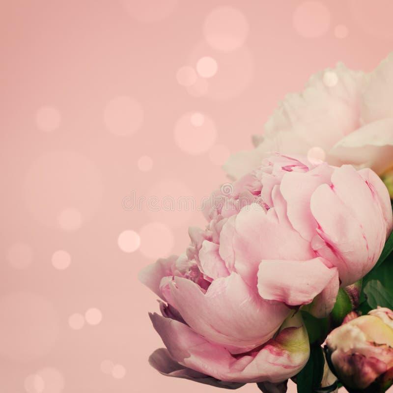 Różowe peonie na pastelowym tle zdjęcia stock