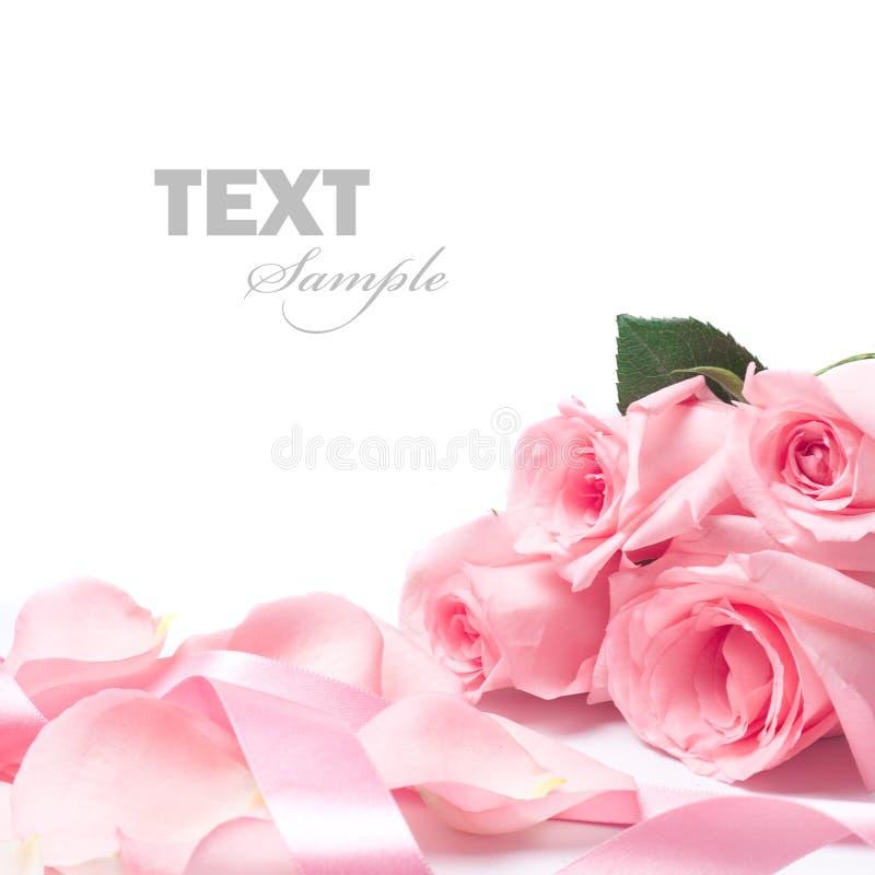różowe róże royalty ilustracja
