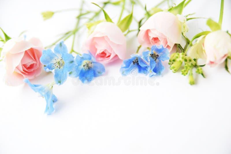 Różowe róże i błękitów kwiaty fotografia stock