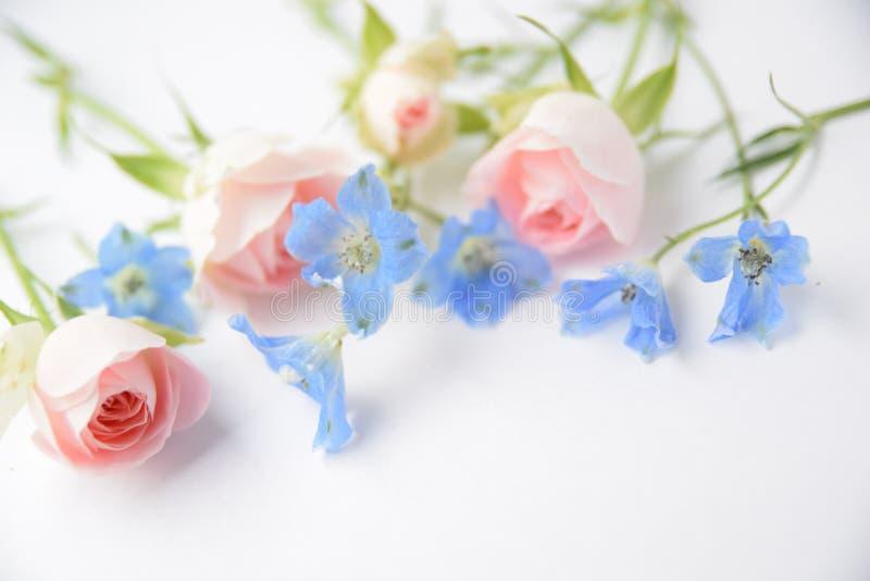 Różowe róże i błękitów kwiaty zdjęcia stock